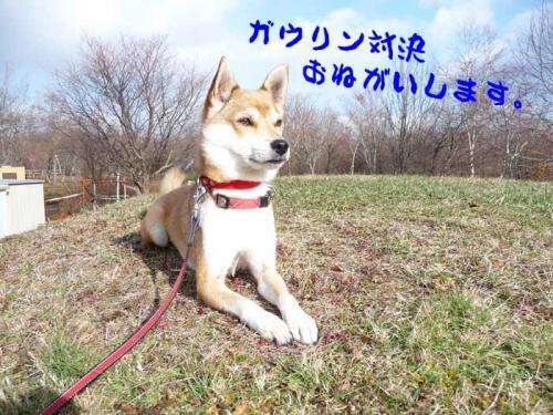 P1310287-AZUKI.jpg