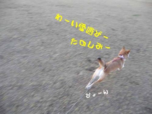 P1310418-AZUKI1.jpg