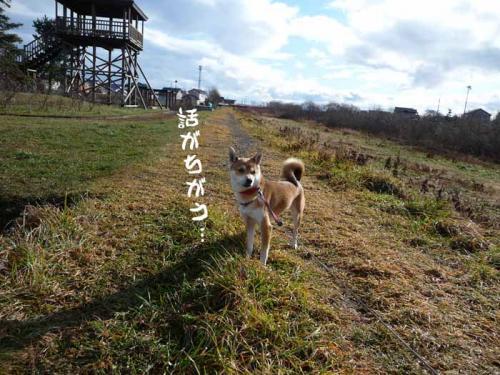 P1310456-AZUKI.jpg