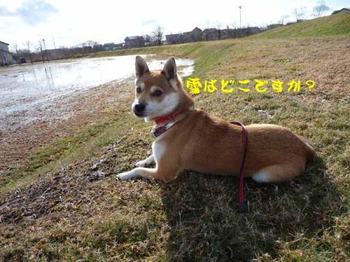P1310471-AZUKI.jpg