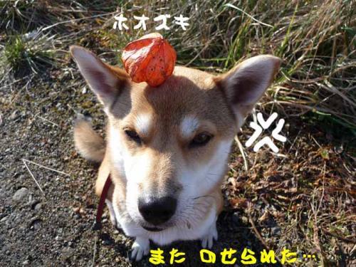 P1310604-AZUKI.jpg