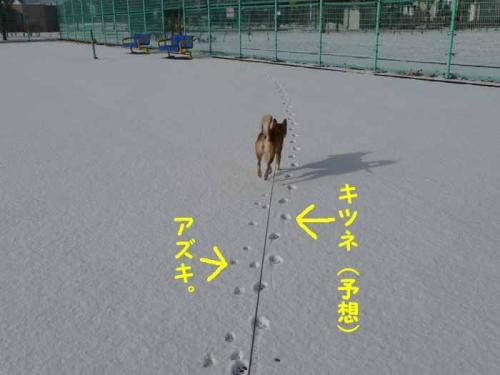 P1310678-AZUKI.jpg