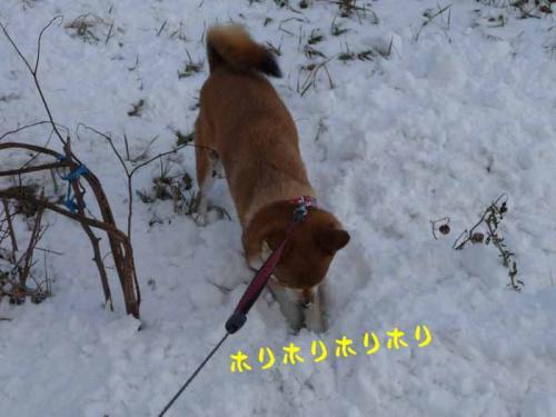 P1310820-AZUKI.jpg