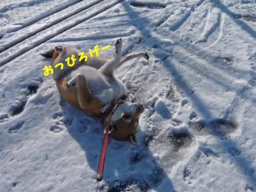 P1320017-AZUKI.jpg