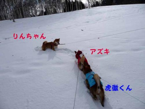 P1320124-AZUKI.jpg