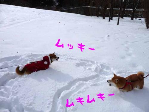 P1320127-AZUKI.jpg