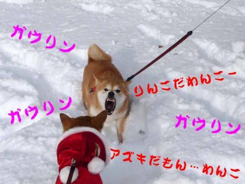 P1320130-AZUKI.jpg
