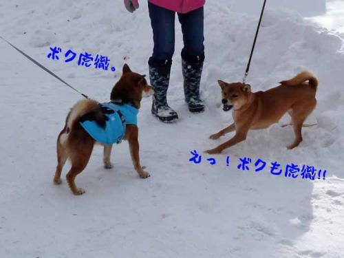 P1320142-AZUKI.jpg