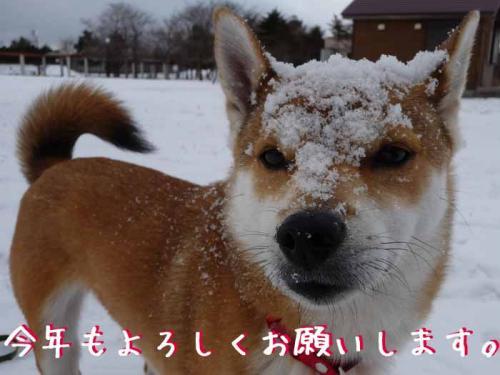 P1320380-AZUKI.jpg