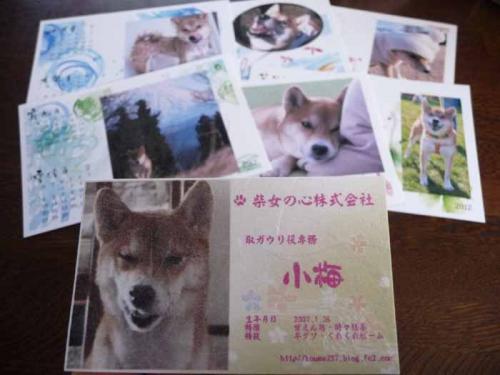 P1320426-AZUKI.jpg