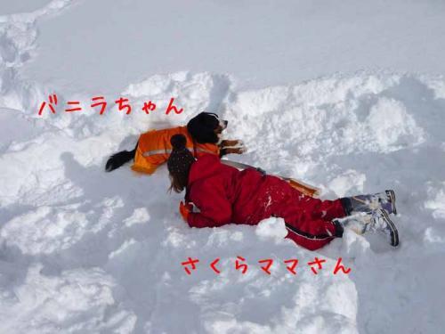 P1330130-AZUKI.jpg