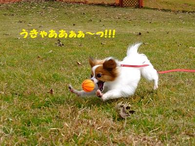 17_20111229121519.jpg