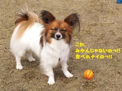 DSCF5317_20120405204145.jpg