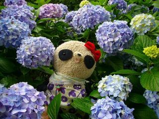 紫陽花の妖精さん?