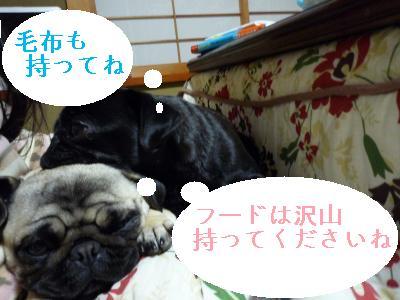 ぱぐパグ枕