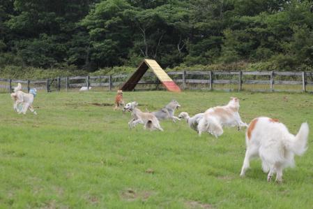 2013-08-04 ぐりんぱ大規模キャンプEOS 171s