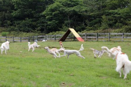 2013-08-04 ぐりんぱ大規模キャンプEOS 172s