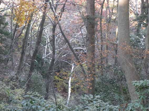 20111215RIMG2533.jpg