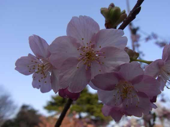 花弁が6枚