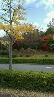 近所紅葉3