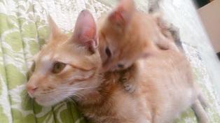 2cats2.jpg