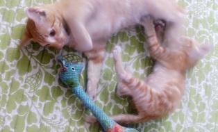2cats3.jpg