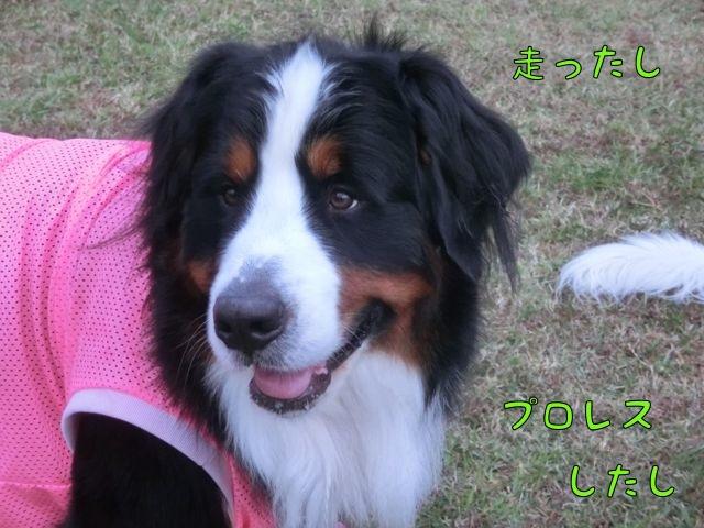 CIMG0046.jpg