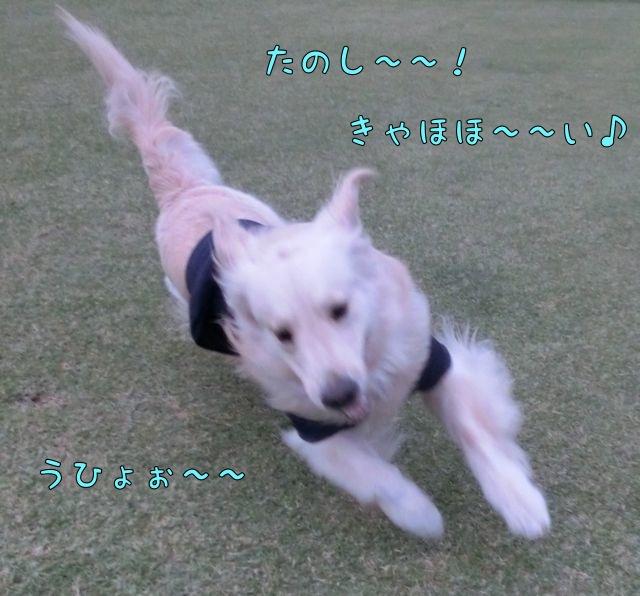 CIMG0361.jpg
