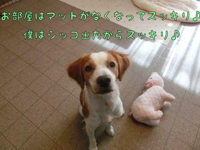 CIMG0576_20141114115206f13.jpg