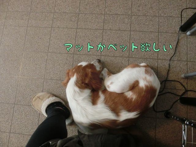 CIMG0595_201411141410169eb.jpg