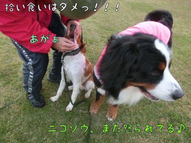 CIMG0692.jpg
