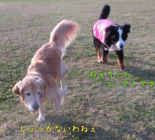 CIMG0766.jpg