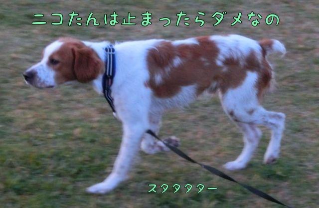 CIMG1029.jpg