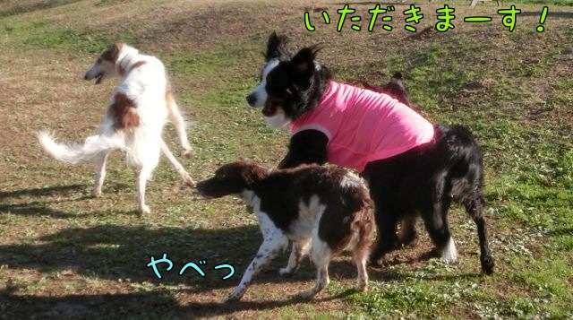 CIMG1843_2014120911150063a.jpg
