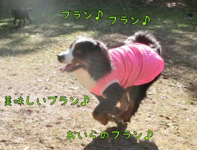 CIMG1907_2014120912281988c.jpg