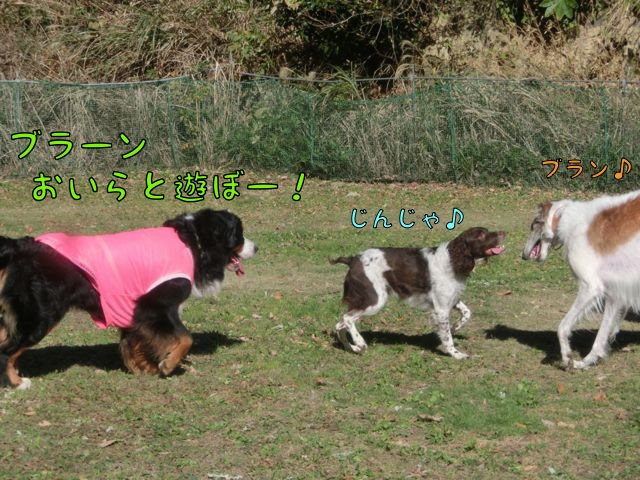 CIMG2020_20141209131522cde.jpg