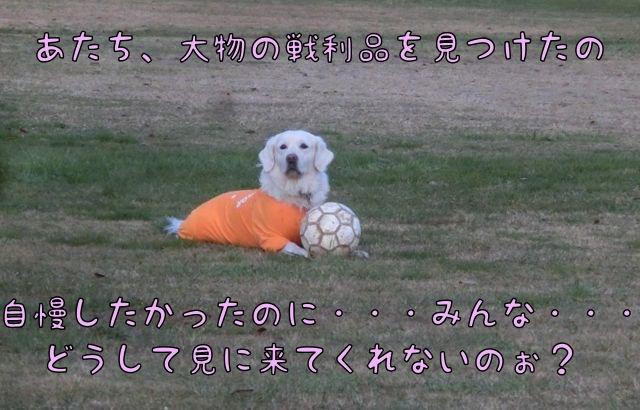 CIMG2110_2014121015375909f.jpg