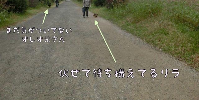 CIMG9460.jpg