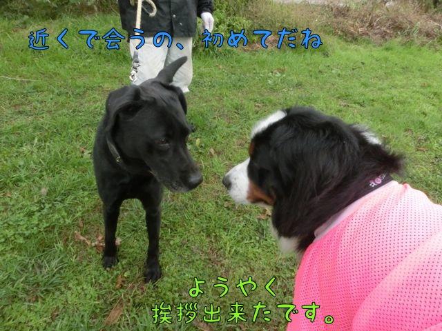 CIMG9486.jpg
