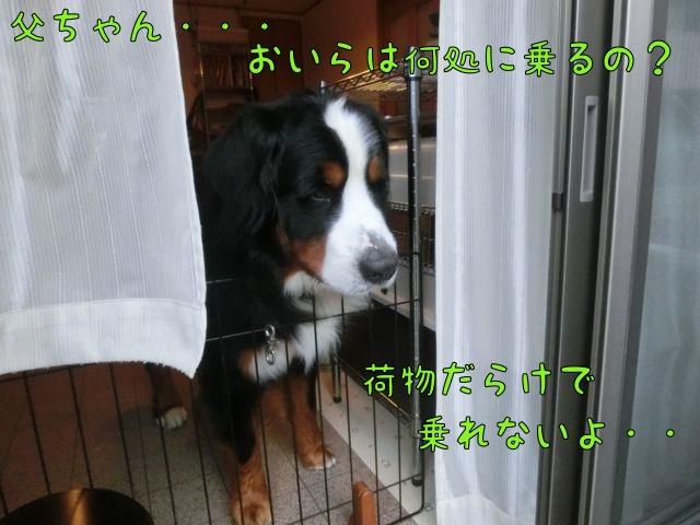 CIMG9517_20141101144653c61.jpg