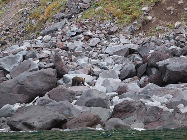 岩場のヒグマ