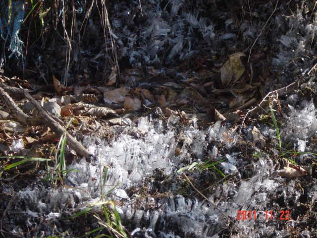庭先の霜柱
