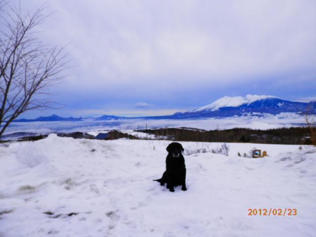 冬季、黒ラブ(まめ)と浅間山