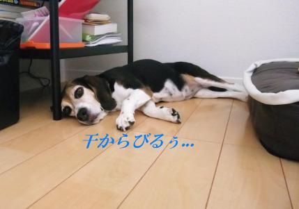 コピー ~ DSCF9920