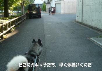 20100806_2.jpg