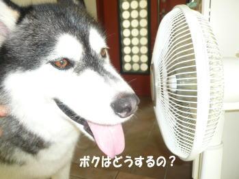 20100829_1.jpg