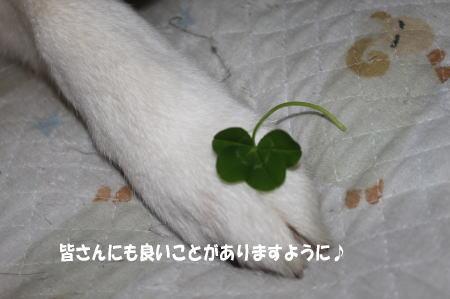 20110525_3.jpg