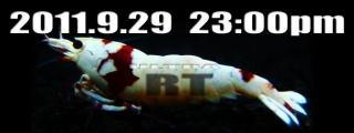 RT1.jpg