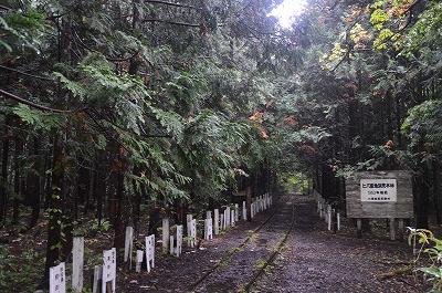 ヒバ林と線路道