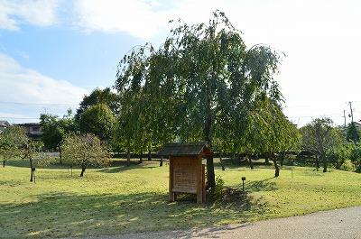 実のなる木